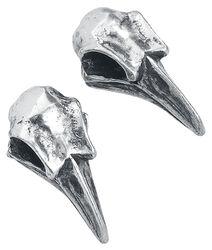 Crâne De Corbeau